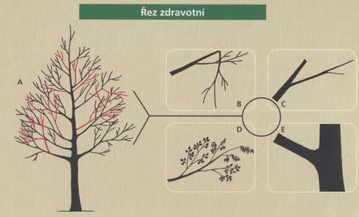 _ez_zdravotn_