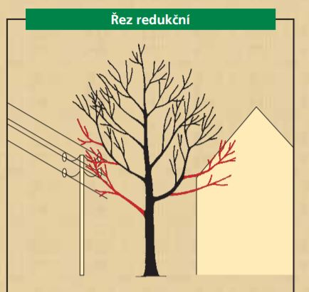 redukční řez