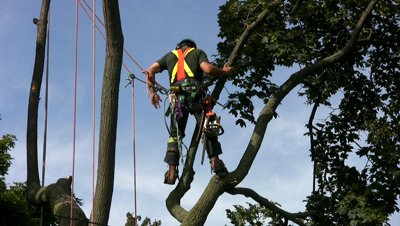 stock-footage-toronto-august-an-arborist-cuts-a-tree-down-in-east-york-august-property-owners