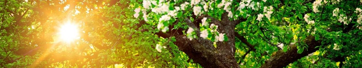 Péče o dřeviny a údržba zahrad – celé Jižní Čechy